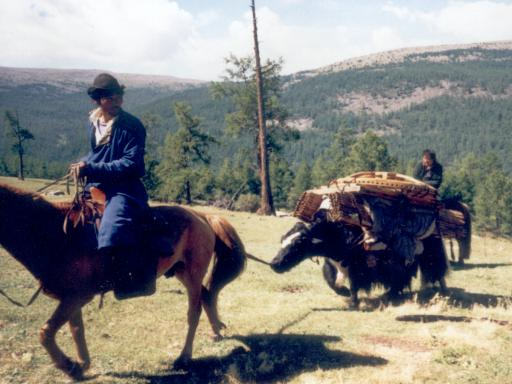 Yurt transport with Yaks